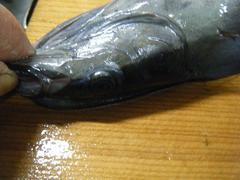 コバンザメの塩焼き (10).jpg