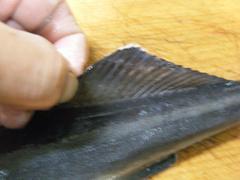 コバンザメの塩焼き (5).jpg